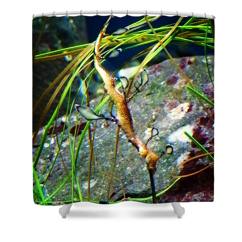 Paintings Shower Curtain featuring the photograph Leafy Sea Dragon by Anthony Jones