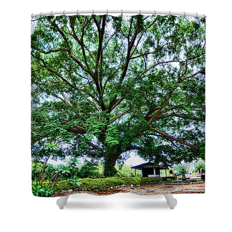 Tree Shower Curtain featuring the photograph Leafy Tree by Galeria Trompiz
