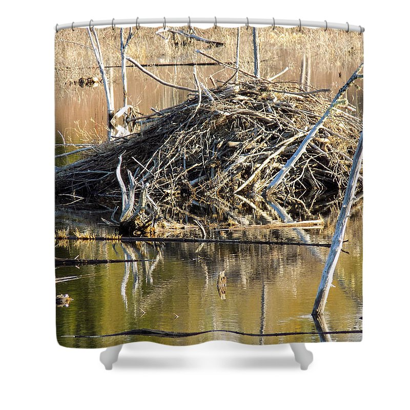 Animal Habitat Shower Curtain featuring the photograph Leave It To Beaver by William Tasker