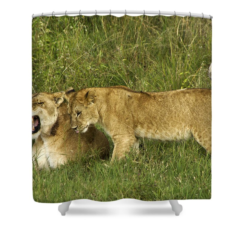 Africa Shower Curtain featuring the photograph Leave Me Alone by Michele Burgess