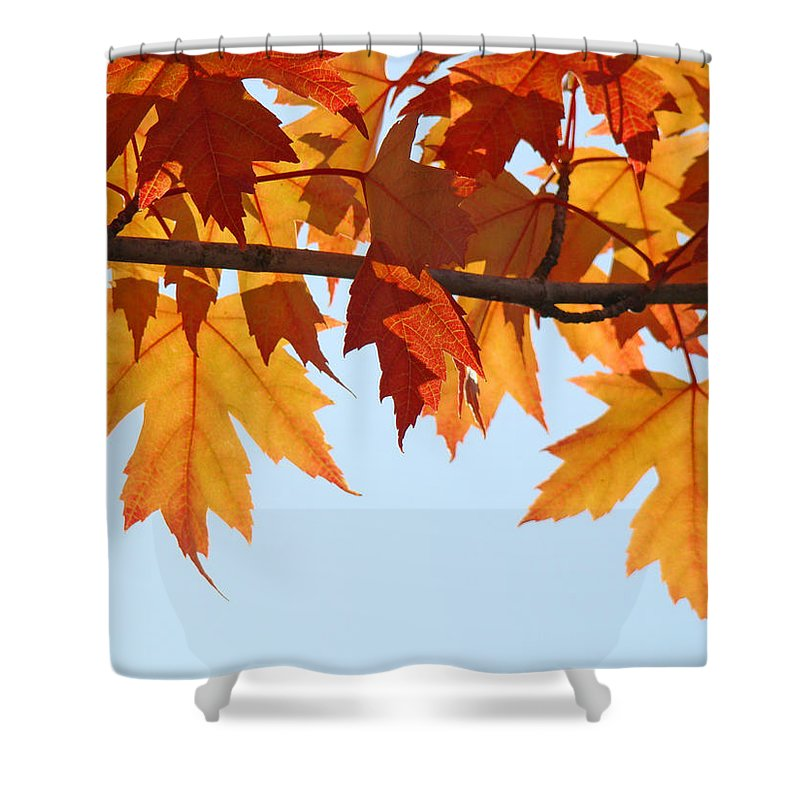 Autumn Shower Curtain featuring the photograph Leaves Autumn Orange Sunlit Fall Leaves Blue Sky Baslee Troutman by Baslee Troutman