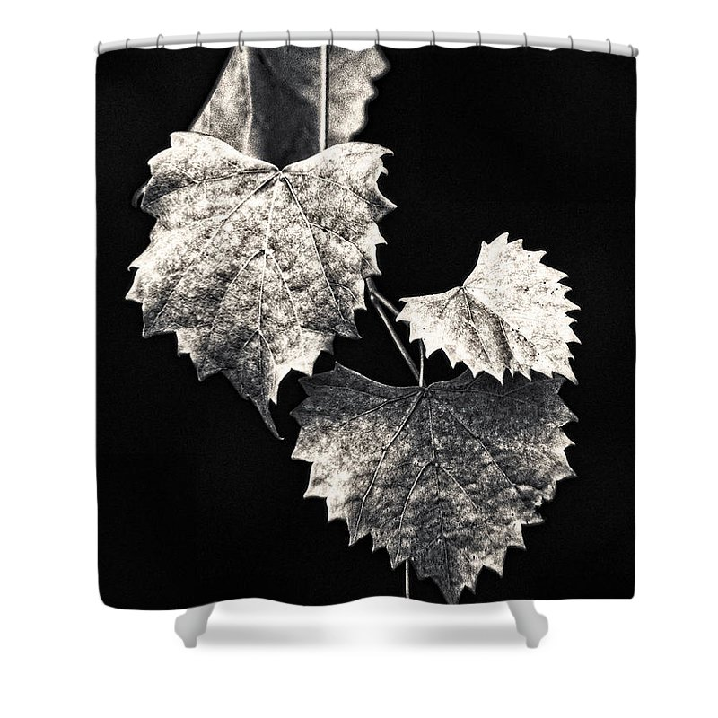 B&w Shower Curtain featuring the photograph Leaves by Christopher Holmes