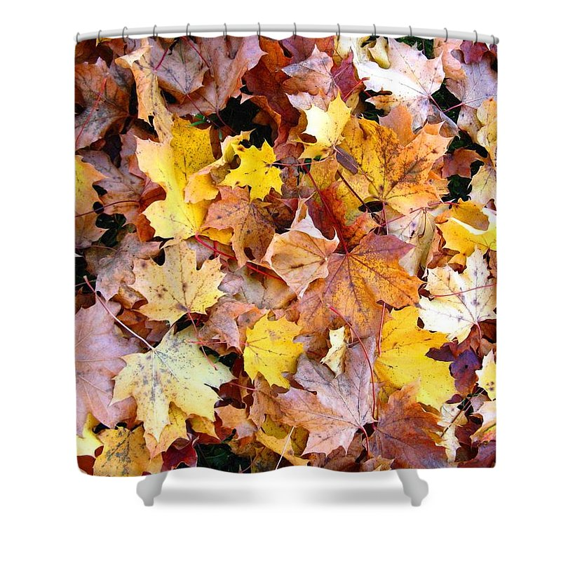 Leaves Shower Curtain featuring the photograph Leaves Of Fall by Rhonda Barrett