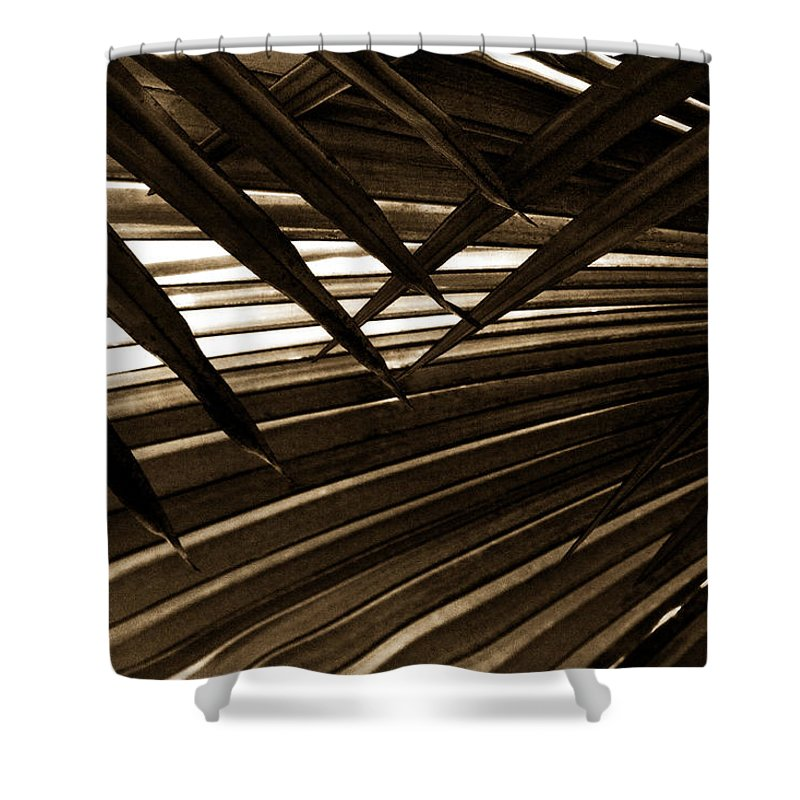 Palm Shower Curtain featuring the photograph Leaves Of Palm Sepia by Marilyn Hunt