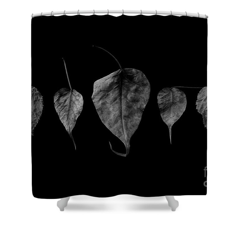 Leaves Shower Curtain featuring the photograph Leaves by Tino Lehmann