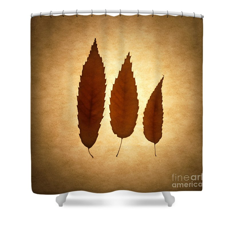 Leaf Shower Curtain featuring the photograph Leaves by Tony Cordoza