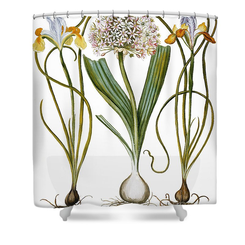 1613 Shower Curtain featuring the photograph Leek And Irises, 1613 by Granger