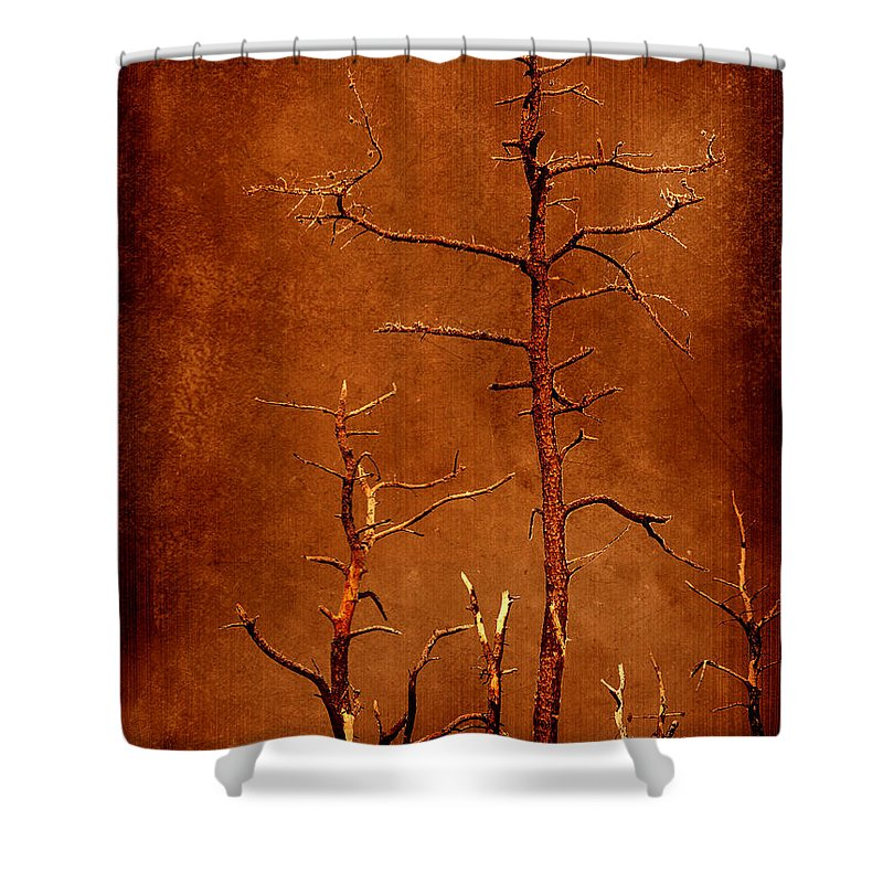 Dipasquale Shower Curtain featuring the photograph Left Bare And Broken by Dana DiPasquale