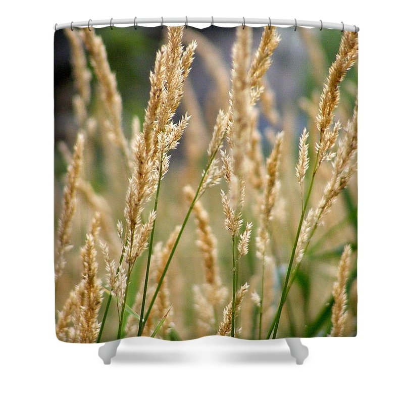 Legal Weed Shower Curtain featuring the photograph Legal Weed by Edward Smith