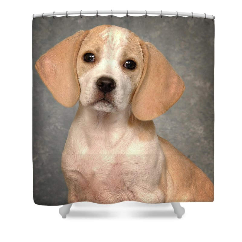 Lemon Beagle Puppy Shower Curtain For Sale By Greg Mimbs