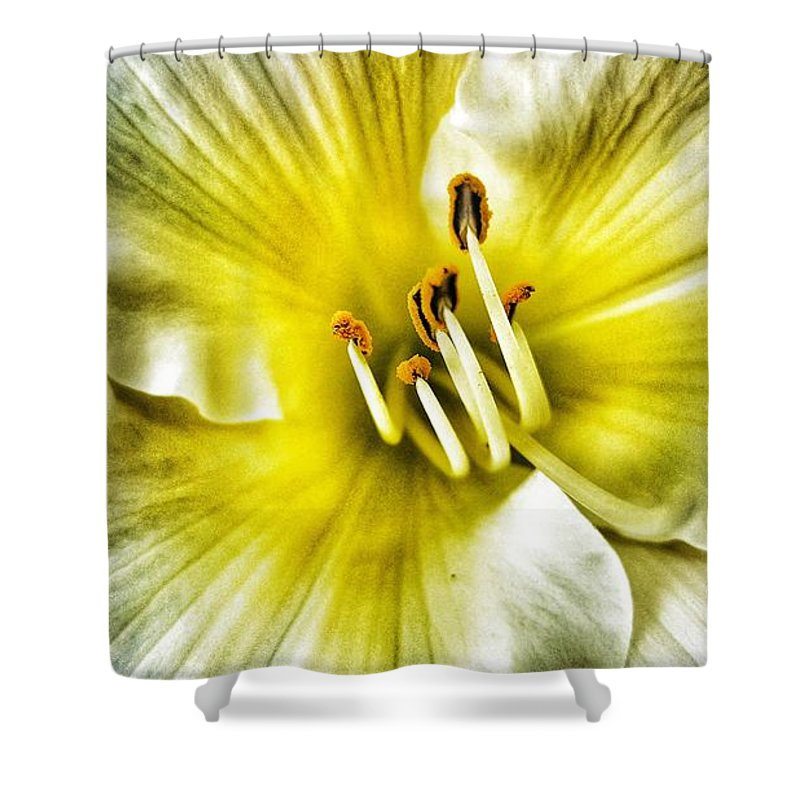 Daylilly Shower Curtain featuring the photograph Lemon Cream Daylilly by Rachel Hannah