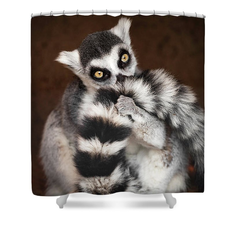 Lemur Shower Curtain featuring the photograph Lemur by David Williams