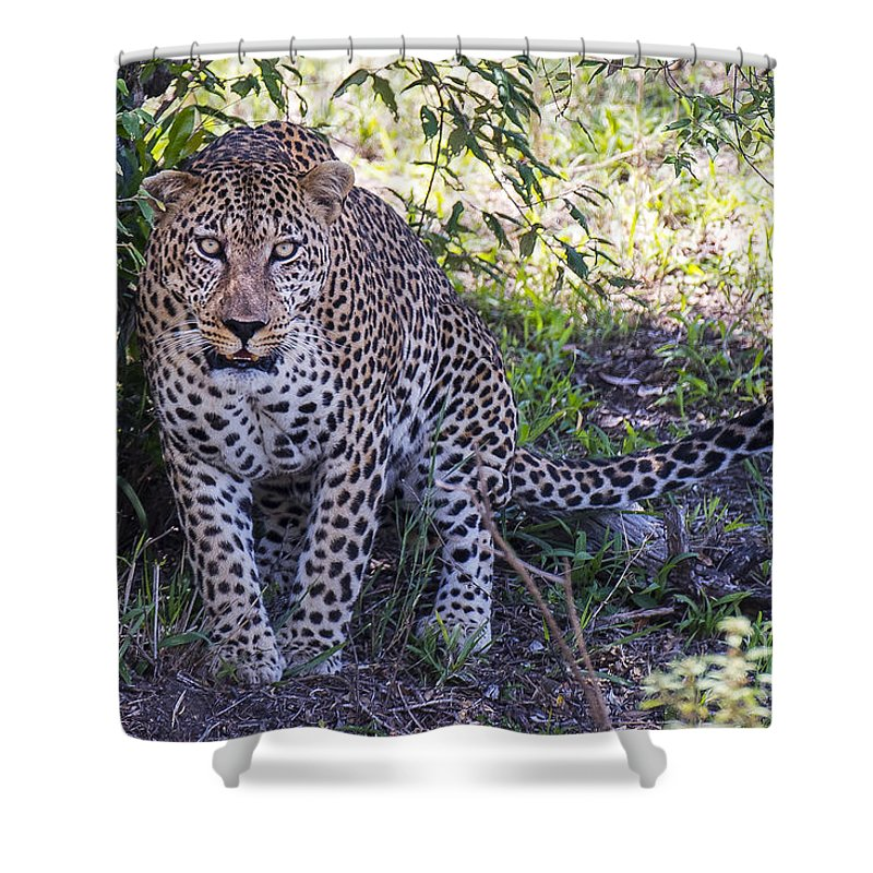 Safari Shower Curtain featuring the photograph Leopard Front by Bryan Pereira