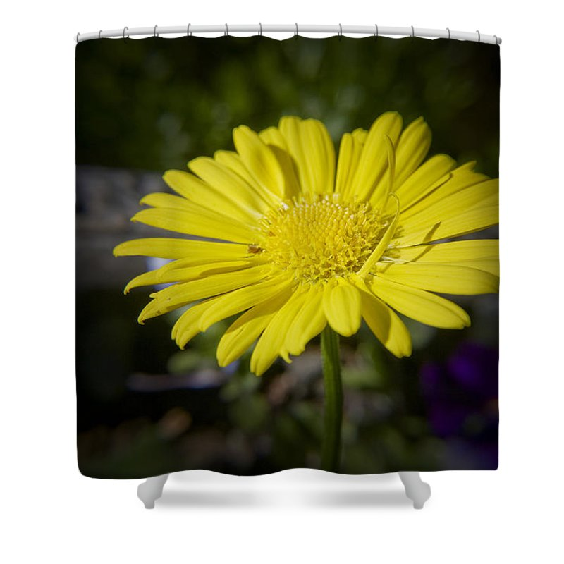 Leopard's Shower Curtain featuring the photograph Leopard's Bane by Teresa Mucha