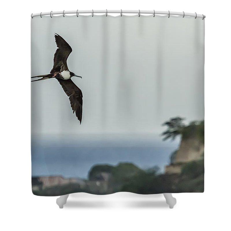 Lesser Frigatebird Shower Curtain Featuring The Photograph Over Antigua By Belinda Greb
