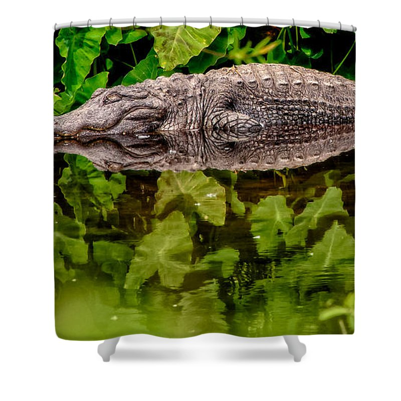 Alligator Shower Curtain featuring the photograph Let Sleeping Gators Lie by Christopher Holmes