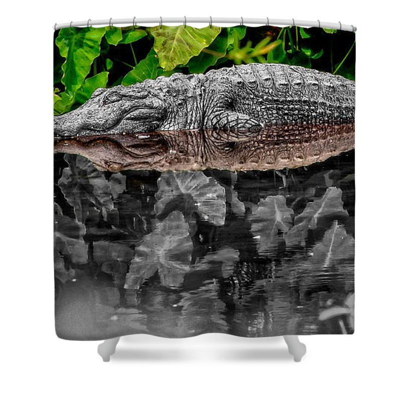 American Shower Curtain featuring the photograph Let Sleeping Gators Lie - Mod by Christopher Holmes