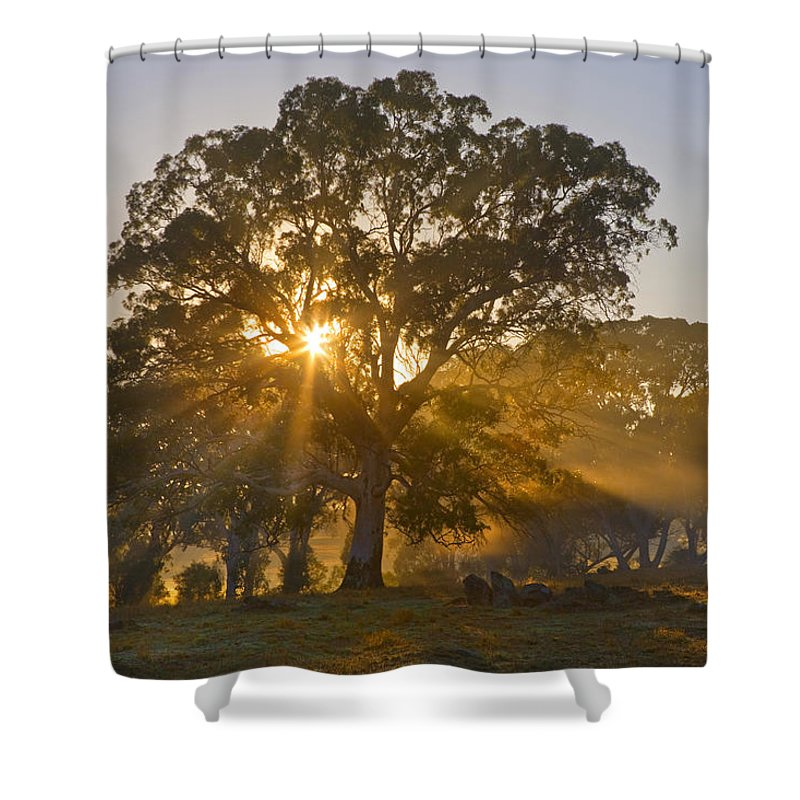 Tree Shower Curtain featuring the photograph Let There Be Light by Mike Dawson