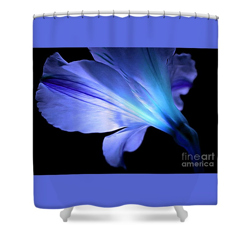 Amaryllis Shower Curtain featuring the photograph Let Your Light Shine by Krissy Katsimbras