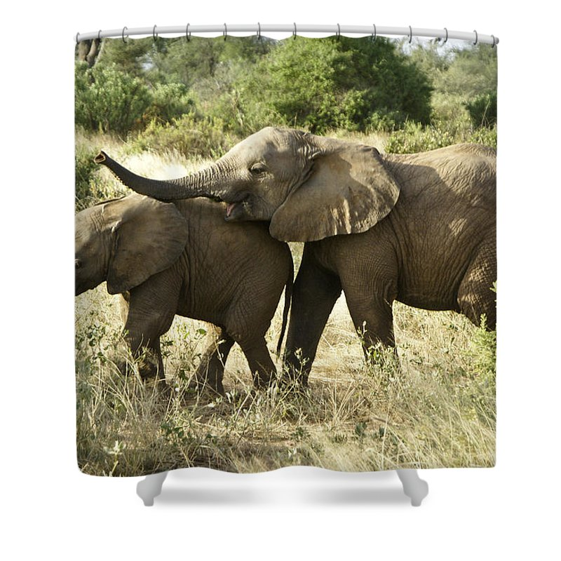 Africa Shower Curtain featuring the photograph Let's Play by Michele Burgess