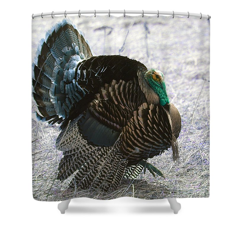 Turkeys. Birds. Fowl Shower Curtain featuring the photograph Lets Talk Turkey by Jeff Swan