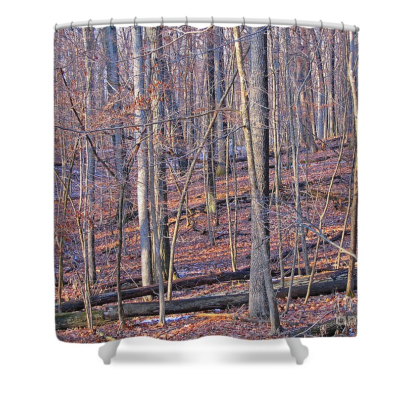 Woods Shower Curtain featuring the photograph Letting The Light In by Ann Horn