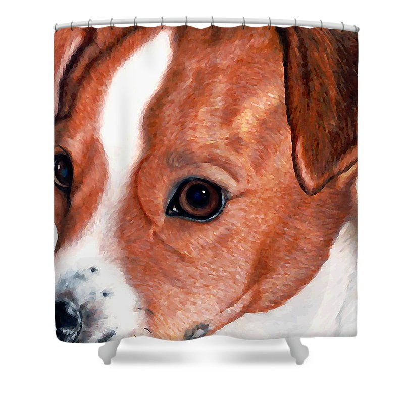 Jack Russell Terrier Shower Curtain featuring the drawing Lewie by Kristen Wesch