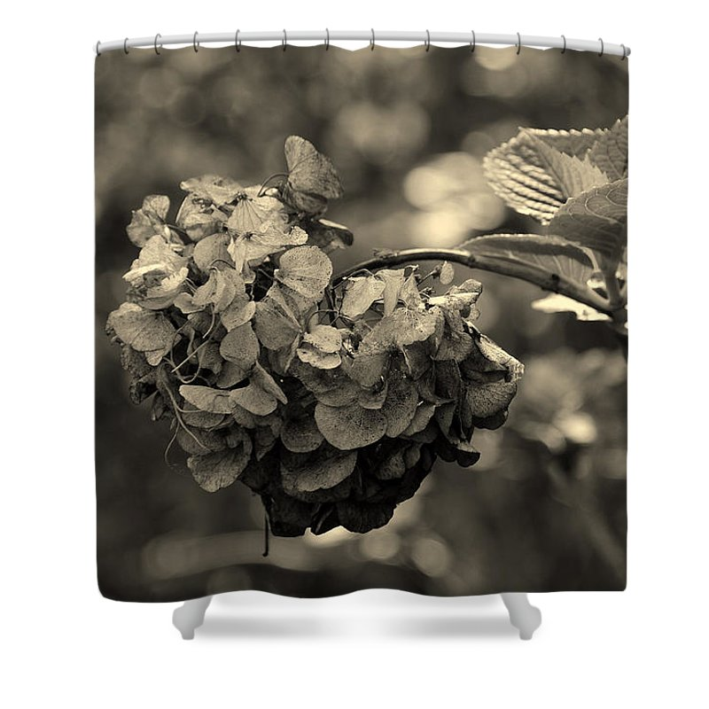 Life And Death Shower Curtain featuring the photograph Life And Death by Susanne Van Hulst