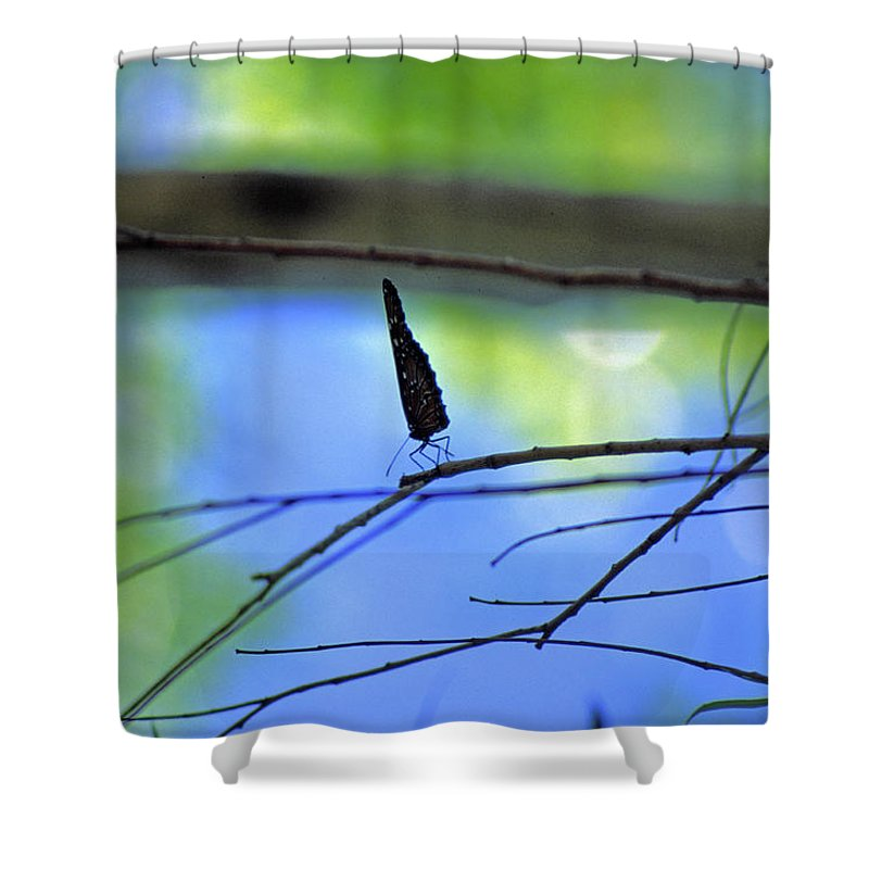 Butterfly Shower Curtain featuring the photograph Life on the Edge by Randy Oberg