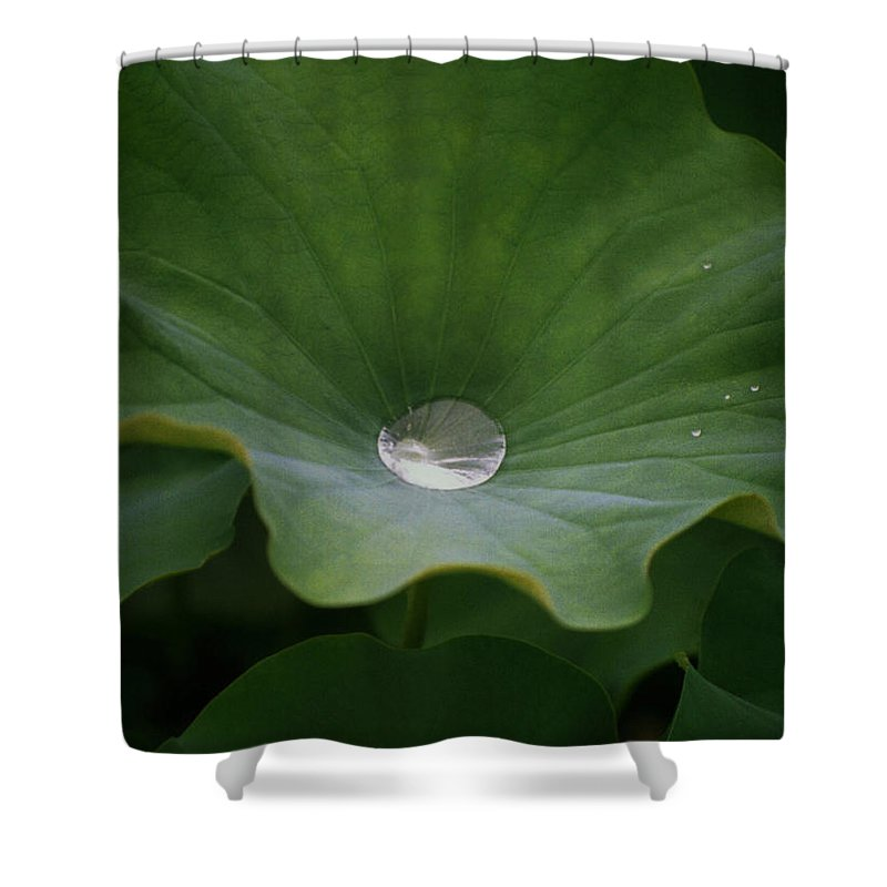 Plant Shower Curtain featuring the photograph Life by Richard Rizzo