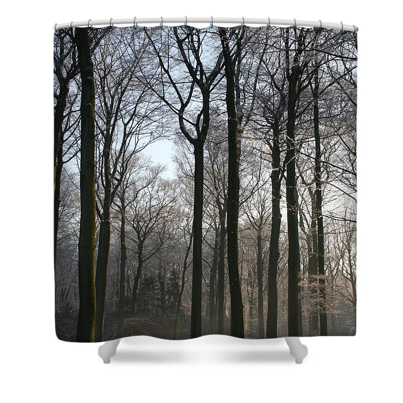 Tree Shower Curtain featuring the photograph Light And Swadows by Christiane Schulze Art And Photography