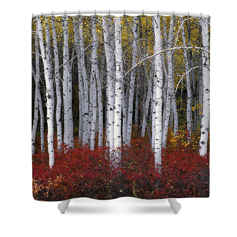 Leland Howard Shower Curtain featuring the photograph Light In Forest by Leland D Howard