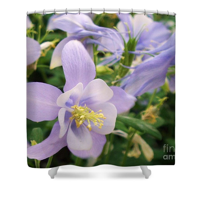 Flowers Shower Curtain featuring the painting Light Lavender Flowers by Eric Schiabor
