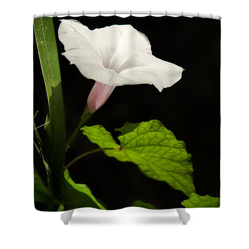 Flower Shower Curtain featuring the photograph Light Out Of The Dark by Christopher Holmes