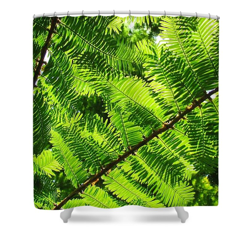 Green Shower Curtain featuring the photograph Light Through The Green by Tamar Pekker