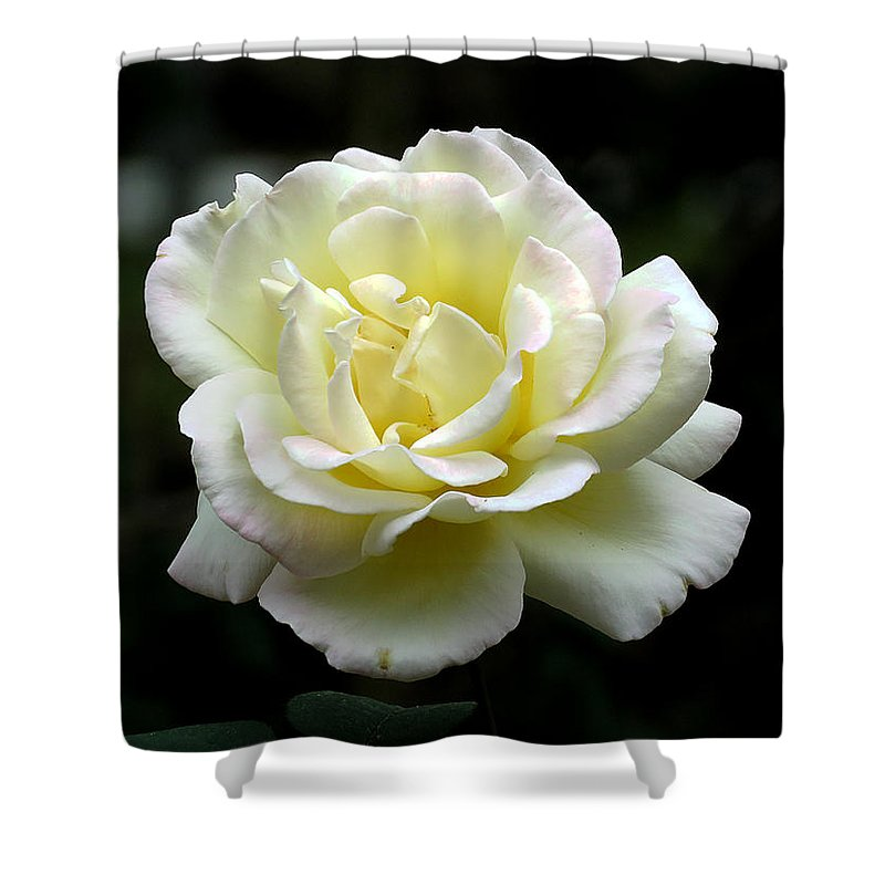 Rose Shower Curtain featuring the photograph Light Yellow Rose 1 by J M Farris Photography