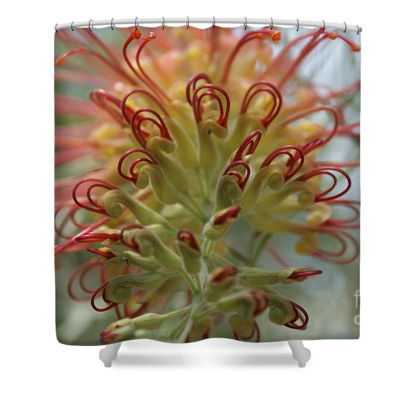 Floral Shower Curtain featuring the photograph Like Stems Of A Cherry by Shelley Jones