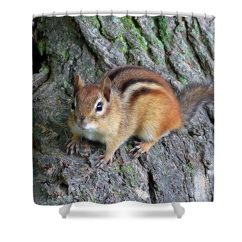 Outdoors Shower Curtain featuring the photograph Lil Chipmunk by Charles Ford