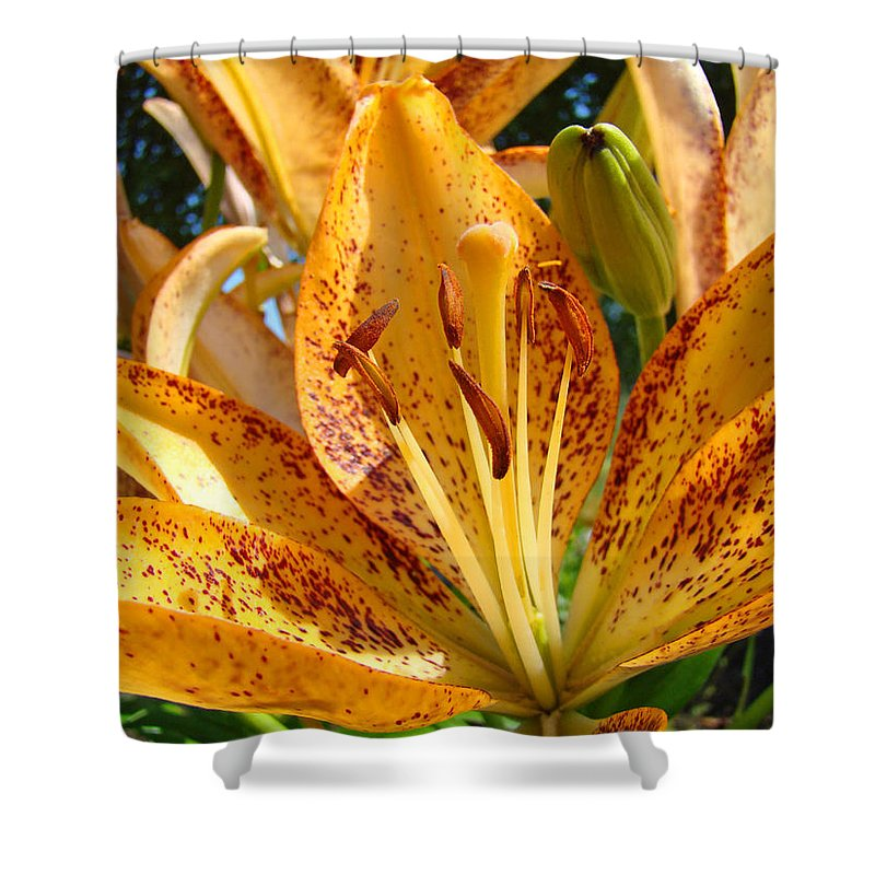 Lilies Shower Curtain featuring the photograph Lilies Art Prints Orange Lily Flowers 2 Gilcee Prints Baslee Troutman by Baslee Troutman
