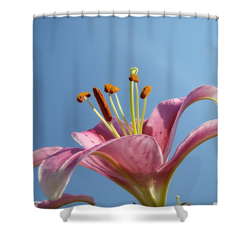 Lilies Shower Curtain featuring the photograph Lilies Art Prints Pink Lily Flower Giclee Art Prints Baslee Troutman by Baslee Troutman