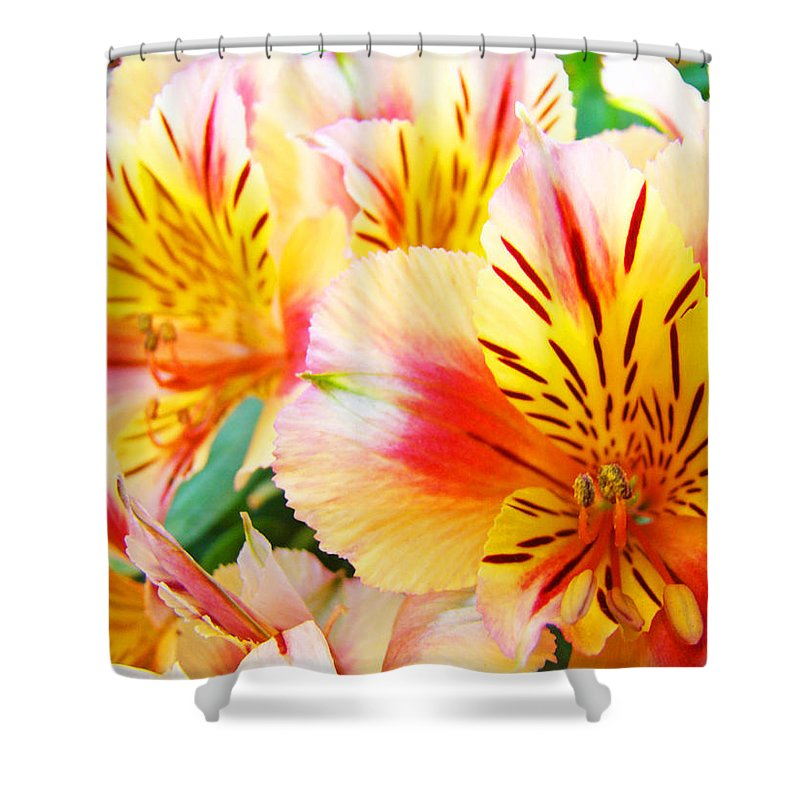 Lilies Shower Curtain featuring the photograph Lilies Art Prints Pink Yellow Lily Flowers 1 Giclee Prints Baslee Troutman by Baslee Troutman