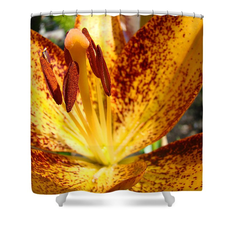 Lilies Shower Curtain featuring the photograph Lilies Glowing Orange Lily Flower Floral Art Print Canvas Baslee Troutman by Baslee Troutman