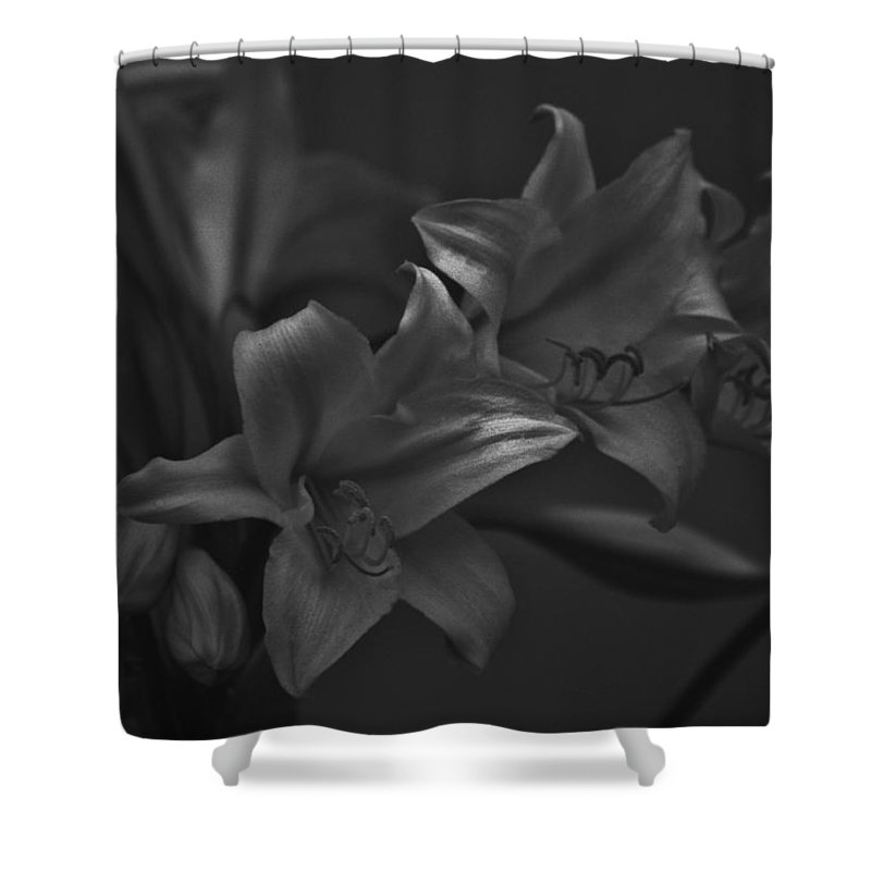 Black And White Photos Shower Curtain featuring the photograph Lillies In Black And White by Kathy Kirkland