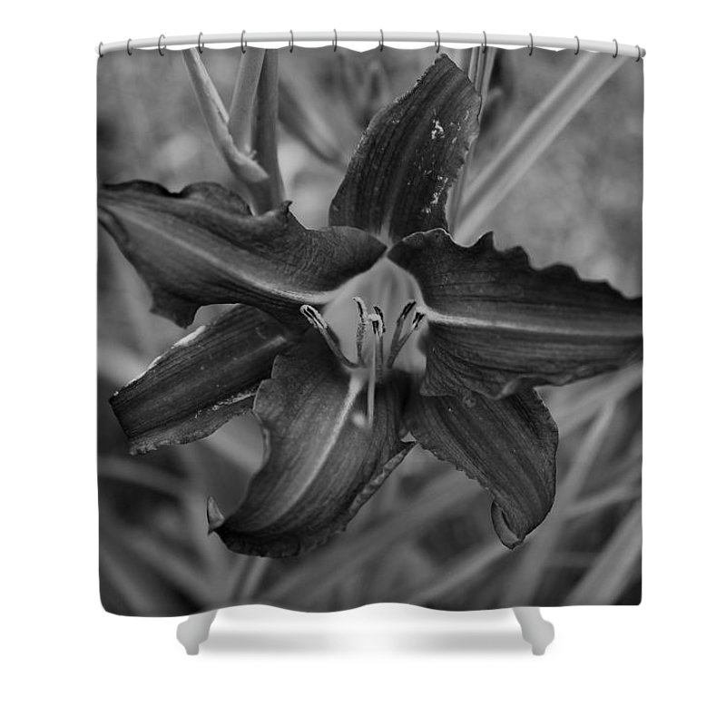 Shower Curtain featuring the photograph Lilly by John Bichler