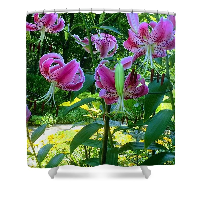 Flowers Shower Curtain featuring the photograph Lilly Love by Nancy Koehler