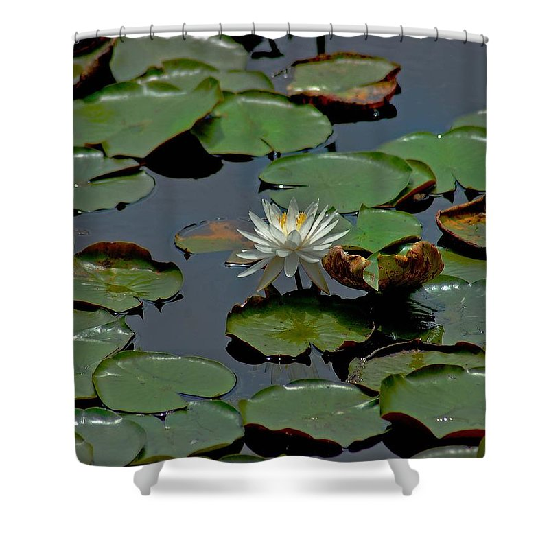 Sunflowers Shower Curtain featuring the painting Lilly On The Pad by Michael Thomas