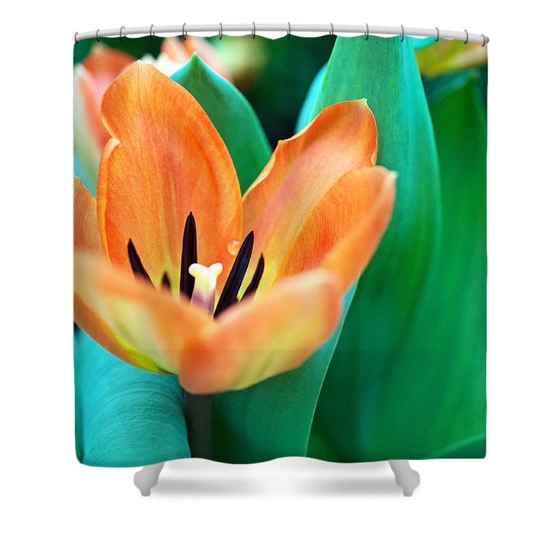 Lily Shower Curtain featuring the photograph Lily #4 by Edward Congdon