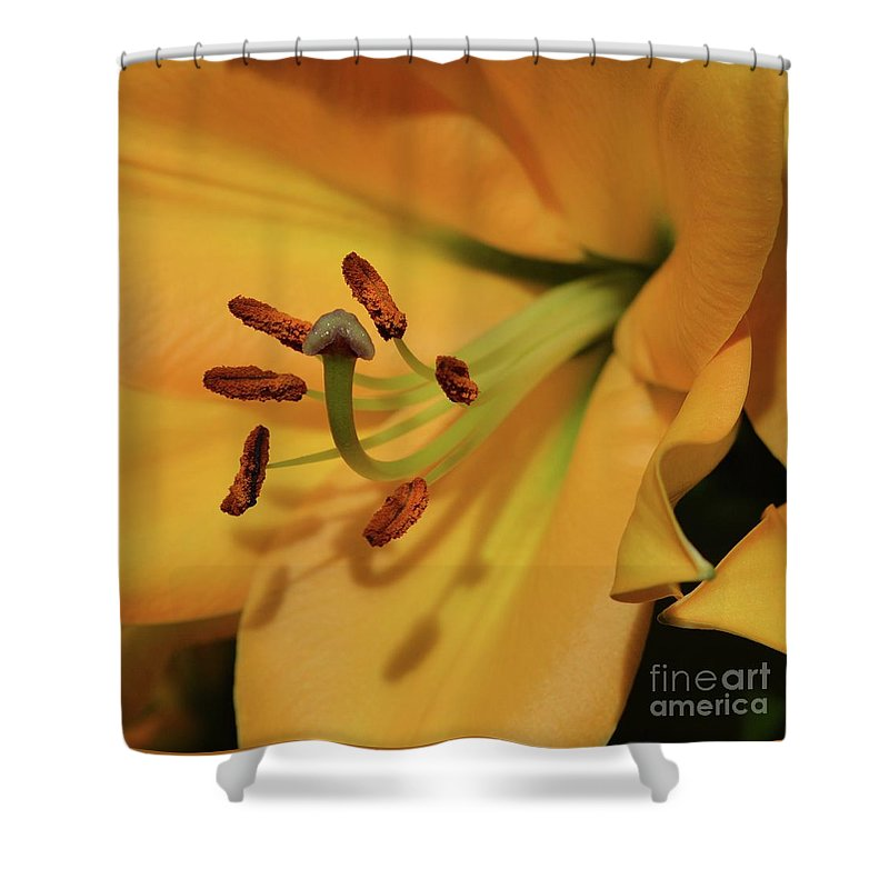 Flowers Shower Curtain featuring the photograph Lily Close Up by Cindy Manero