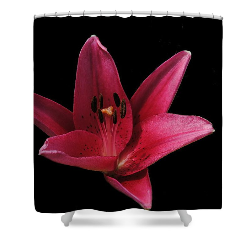 Lily Shower Curtain featuring the photograph Lily by Eric Liller