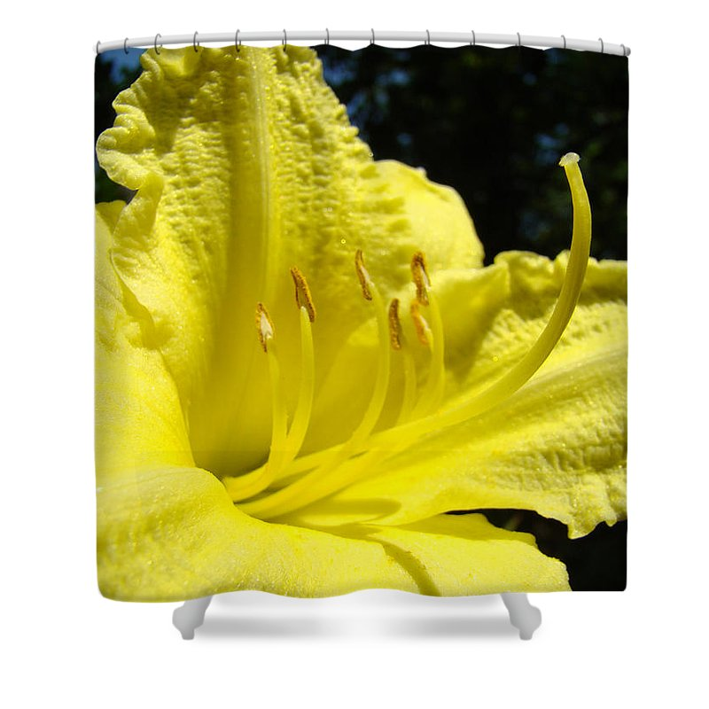 Lilies Shower Curtain featuring the photograph Lily Flower Artwork Yellow Lilies 1 Giclee Art Prints Baslee Troutman by Baslee Troutman